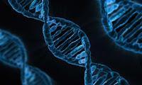 Nuevos objetivos terapéuticos para tratar el lupus