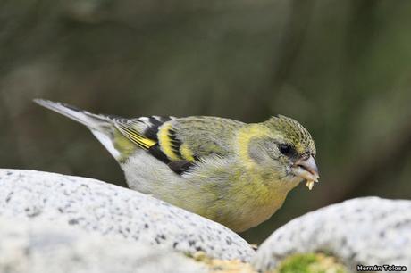 Aves del mirador Inalco