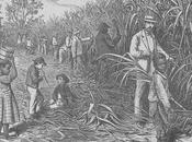 azúcar, historia motor geopolítico económico