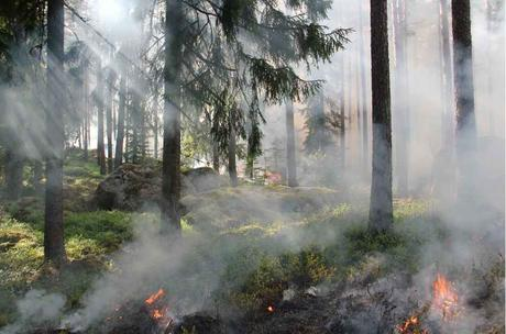 incendios forestales causas