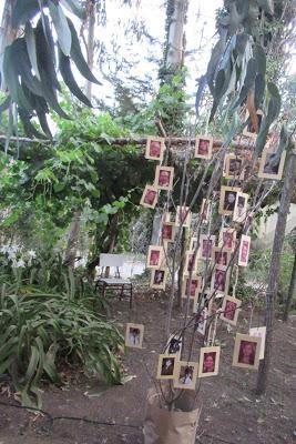 Árbol con fotografías colgantes