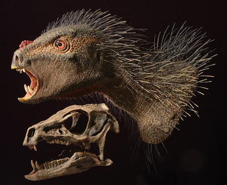 ¿Son los heterodontosáuridos, paquicefalosaurios basales?