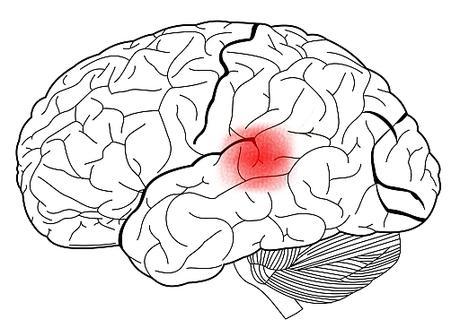 Las áreas del cerebro responsables del lenguaje / The areas of the brain responsible for language