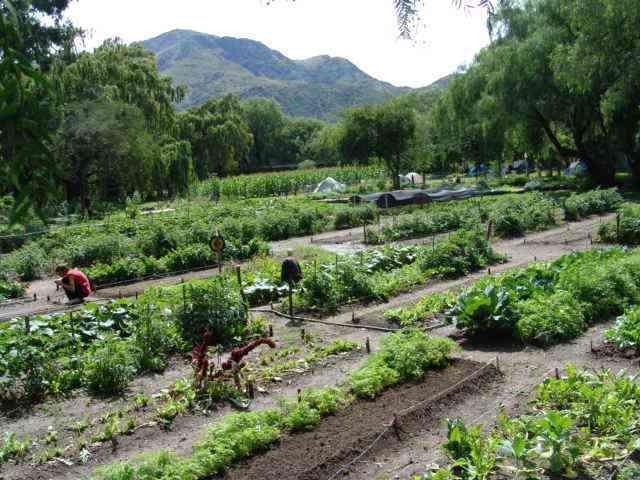 La huerta org nica paperblog for Plantas para huerta organica