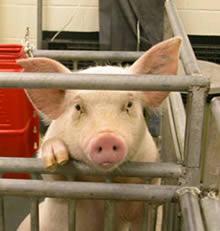 ¿Por qué soy vegano? (Gary Yourofsky, verano 2010)