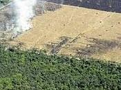 Tala árboles: Deforestación