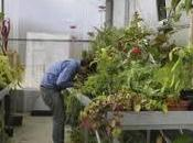 Hospital para plantas
