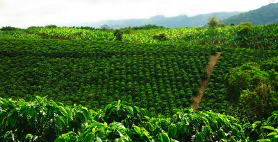 Paisaje cafetero de Colombia: descanso y aventura