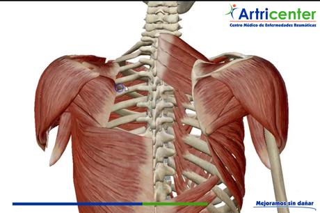 Ejercicios para fortalecer la musculatura de los miembros superiores