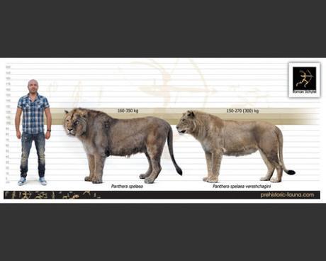 El león cavernario sí es distinto del león africano