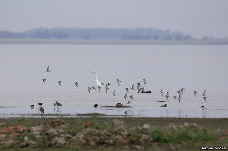 Laguna Melincué (Noviembre 2019)