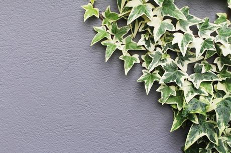 Plantas colgantes y trepadoras para alegrar tus paredes