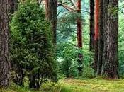 reforestación, cuál importancia beneficios trae