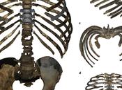pecho Homo erectus