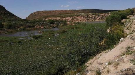 Lirio acuático no ha sido limpiado por completo de la Presa de San José