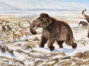 razón extinción megafauna?