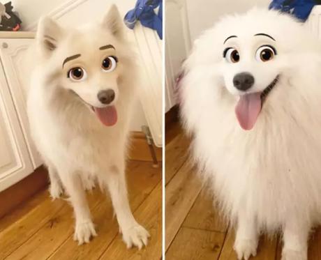 Zona random: Nuevo filtro de Snapchat convierte a tu mascota en un personaje de Disney