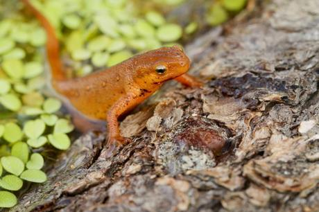 Datos curiosos sobre los anfibios