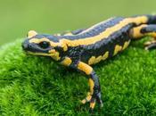 Datos curiosos sobre anfibios