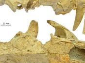 Nuevo dientes sable destino barburofélidos