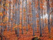 Olor otoño.