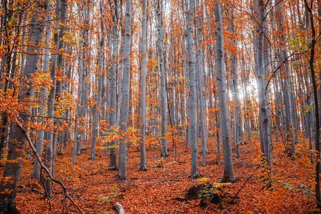 Olor a otoño.