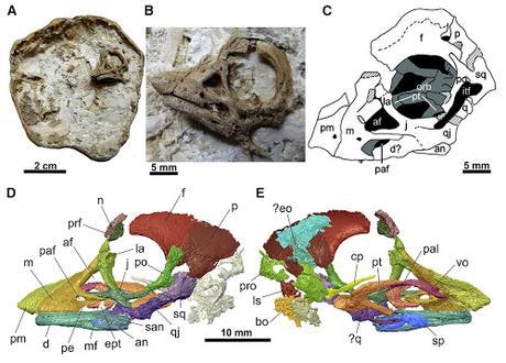 Curiosa cría de Titanosaurio