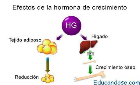 hormona del crecimiento
