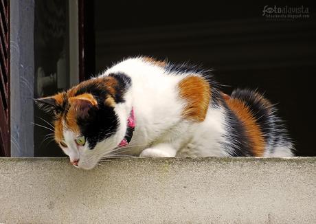 Gato expectante - Fotografía