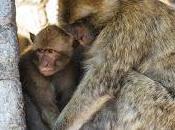 otros primates europeos