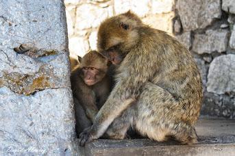 Los otros primates europeos