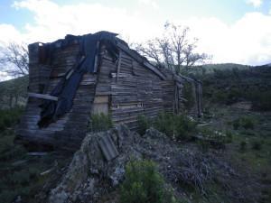 Caza mayor en la Sierra Norte de Guadalajara