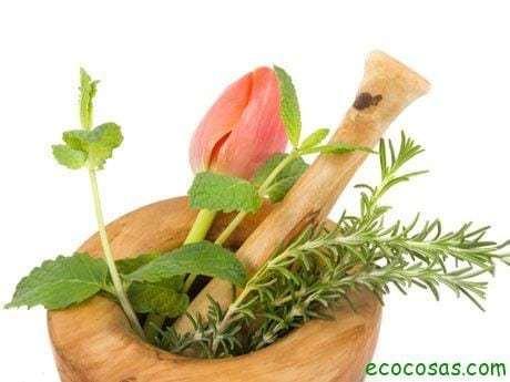 consejos para recolectar plantas medicinales