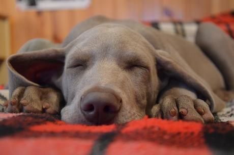10 señales de que tu perro está feliz