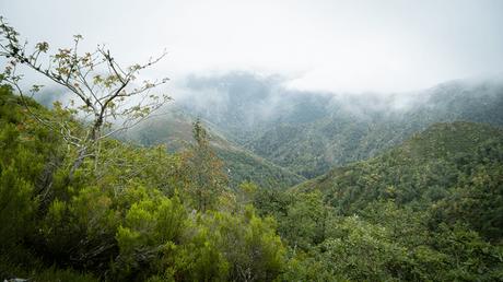 Muniellos, el bosque de Asturias