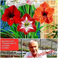 Plantas para tu casa de fácil cuidado-ALVARO RUIZ MORENO-