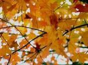 estás preparado para equinoccio otoño este año?