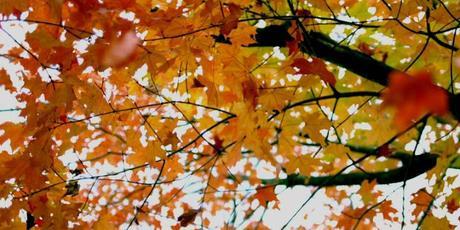 ¿Ya estás preparado para el equinoccio de otoño de este año?