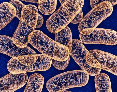 La medicina mitocondrial al rescate de sus células 1
