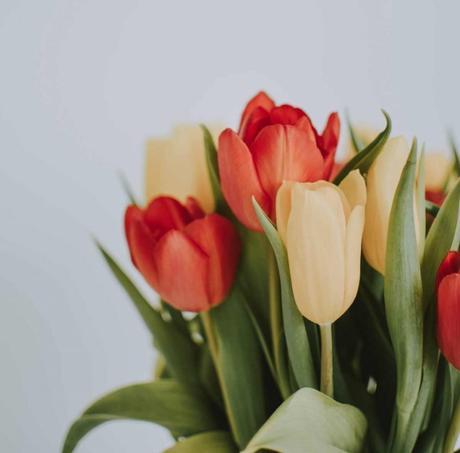 flores emociones