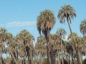 Parque nacional: palmar
