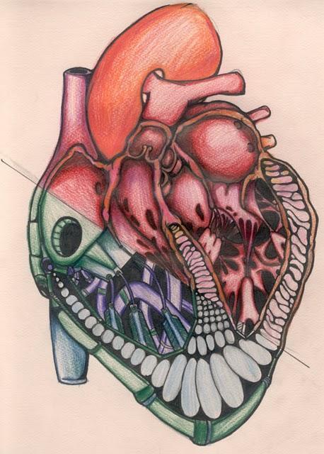 Los Latidos del Corazón y la Meditación