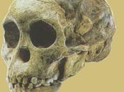 Evolución humana: Australopithecus, Homo Habilis, Erectus Neanderthal