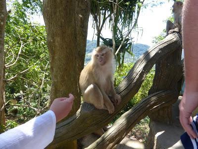 Monos, templo Gran Buda Phuket, Tailandia, La vuelta al mundo de Asun y Ricardo, vuelta al mundo, round the world, mundoporlibre.com