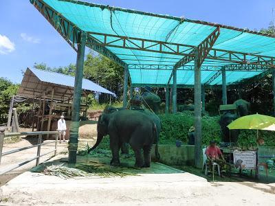 Granja elefantes,  Elephant Farm, Phuket, Tailandia, La vuelta al mundo de Asun y Ricardo, vuelta al mundo, round the world, mundoporlibre.com
