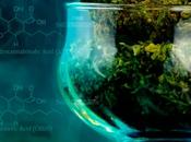 ¿Conoces usos terapéuticos cannabinoides?