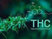 tetrahidrocannabinol puede prevenir cáncer colon
