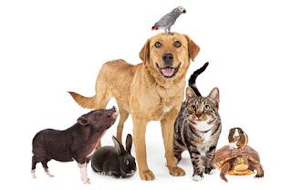Día de los animales