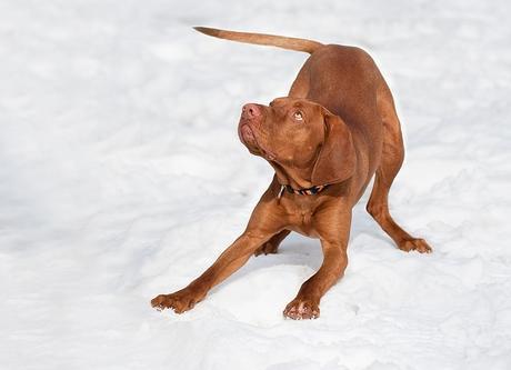 10 formas de hacer que tu perro deje de morder