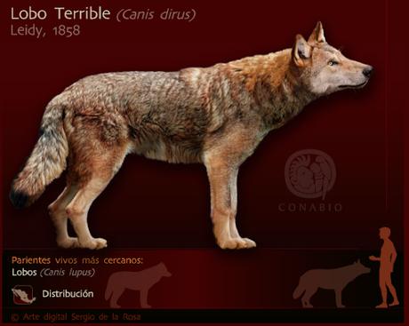 ¿Un lobo terrible en China?